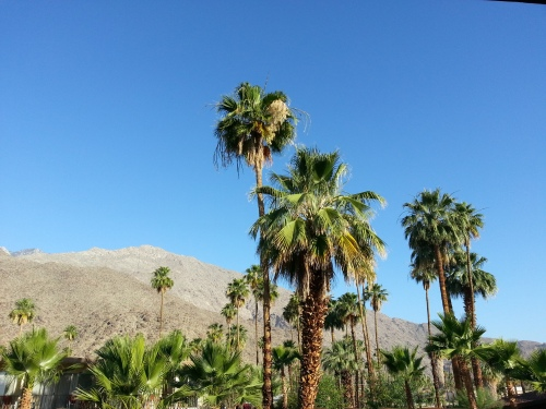 The view from my hotel room balcony, Palm Springs