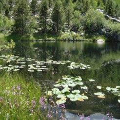 Warm Lake, 2009.